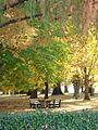 Cook Park - panoramio.jpg