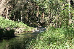 Coomera River in Lamington National Park.jpg