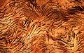 Copper specimen detail (8372168188).jpg
