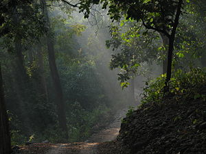 taken during our jeep safari at jim corbett na...