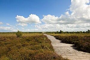 County Longford - Corlea Bog Trackway