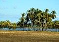 Costa Rica DSCN8856-new (30986573002).jpg