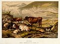 Cows and sheep by an upland stream with a goat standing in t Wellcome V0021722.jpg