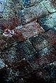 Cromatismi murari-12 (1398091800).jpg