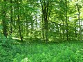 Croom Dale Plantation - geograph.org.uk - 1335002.jpg