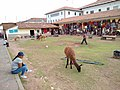 Cusco Peru- Lamas waiting for tourists for money.jpg