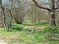 Cutlers Wood - geograph.org.uk - 384151.jpg
