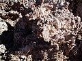 Détail du Salar d'Atacama.jpg