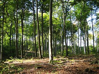 Düben Heath Nature Park nature park in Saxony-Anhalt and Saxony, Germany