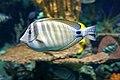 DSC08855 - Ripley's Aquarium (37030804166).jpg