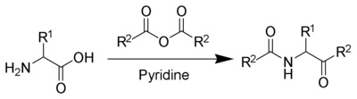 The Dakin-West reaction