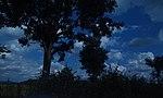 Dark Nature.jpg