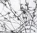 Das-Frühe-Kriel-Detail-Schweidkarte-17-Jh.JPG