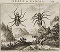 De Spinneweb Tarantula - Dapper Olfert - 1688.jpg