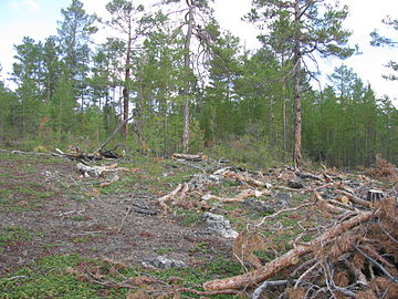 Deforestation Olkhon.JPG