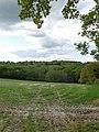 Dens Wood - geograph.org.uk - 1289832.jpg