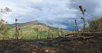Extinction - Scorched land resulting from slash-and-burn agriculture