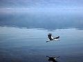 Dojran Lake 245.jpg