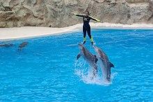 parc aquatique dauphin