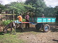 Donkey carts to carry urine containers (3940244809).jpg