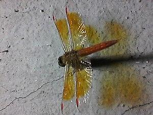 Dragonfly0206.jpg