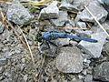 Dragonfly - Flickr - GregTheBusker (2).jpg