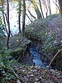 Drain feeds into the Severn - geograph.org.uk - 632251.jpg