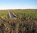 Drain separating marsh pastures - geograph.org.uk - 1110626.jpg