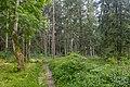 Dubrava Ščomyslickaja natural monument (Belarus) p20.jpg