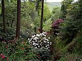 Dunge Valley Gardens from head of valley. - geograph.org.uk - 431395.jpg
