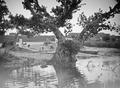 ETH-BIB-Baum am Fluss-Tschadseeflug 1930-31-LBS MH02-08-0496.tif
