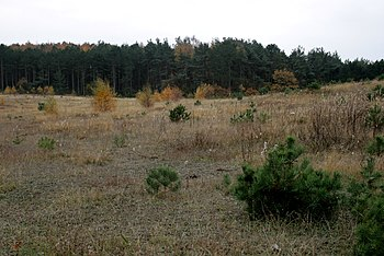 Early succession on poor, sandy soil at Øer, D...