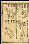 Early C20 Chinese Lithograph; 'Fan' diseases Wellcome L0039473.jpg