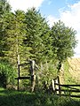 Edge of Camp Plantation - geograph.org.uk - 544988.jpg