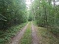 Ein Waldweg am Wieselberg bei Tauberbischofsheim-Dittwar 03.jpg
