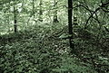Eisenzeitliche Grabhügelgruppe Bärhau, Unterlunkhofen, bewachsener Grabhügel.jpg