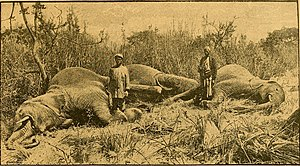 The story of Africa and its explorers (1892). By Internet Archive Book Images via Wikimedia Commons.Public Domain