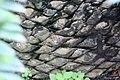 Encephalartos manikensis 1zz.jpg
