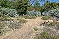Endangered Plant Garden - Bok Tower Gardens - DSC02155.jpg