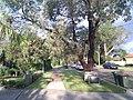 Engadine NSW 2233, Australia - panoramio (37).jpg