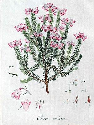 Johann Christoph Wendland cover