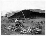 Eskimo woman stringing cod with umiak in background, Nome, 1904 (NOWELL 16).jpeg