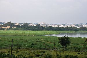 Bellandur Lake - Locals remove the plant cover on a daily basis, but it grows back rapidly, killing fish and aquatic life.