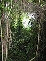 FTH Biosphère 2..JPG