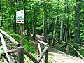 Faeto forest.jpeg