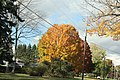 Fall Foliage in Johnstown Region - panoramio (4).jpg