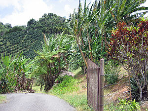 Farm in Adjuntas