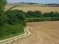 Farmland and track, Forston - geograph.org.uk - 545439.jpg