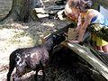 Feeding time! (4869789162).jpg