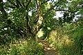 Felsengärten 08-2013 - panoramio.jpg